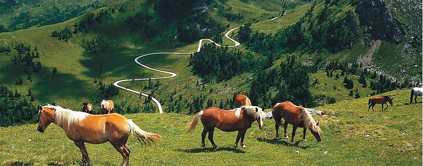 NOCKALM платная дорога в Австрии