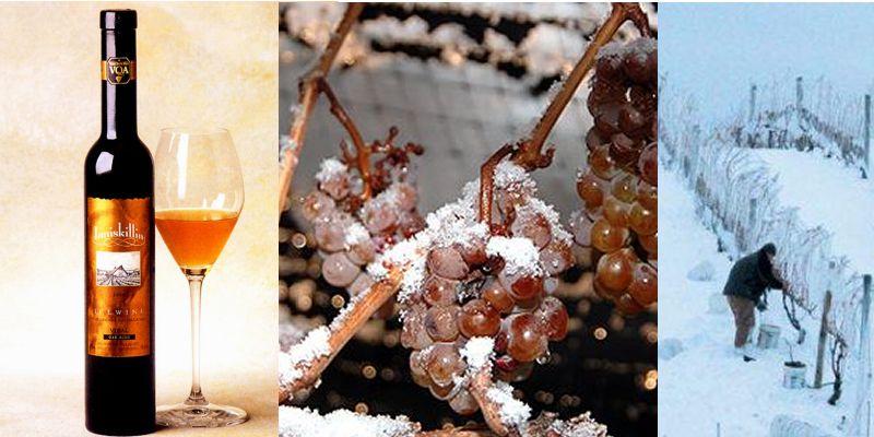 вино австрия айсвайн