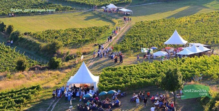 Баден Австрия виноградники